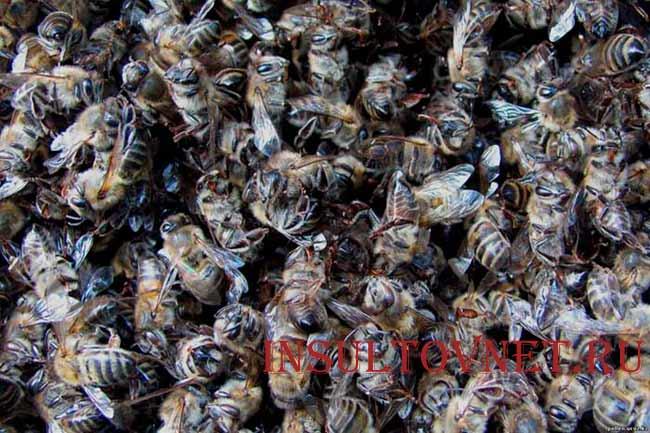 Пчелиный подмор после инсульта