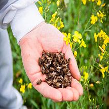 Пчелиный подмор при инсульте