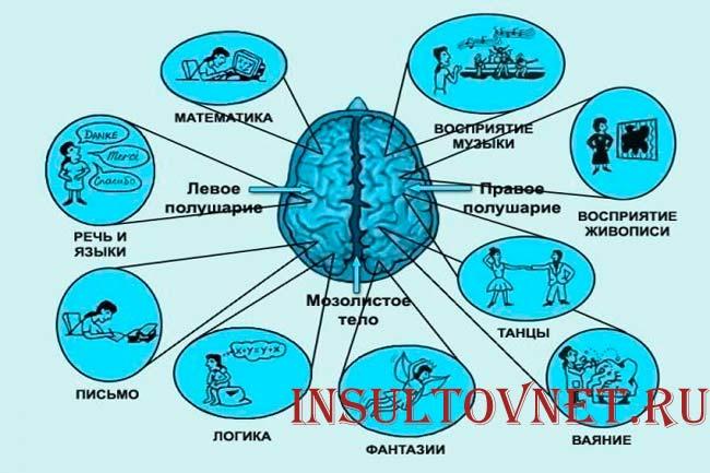 За что отвечает мозг