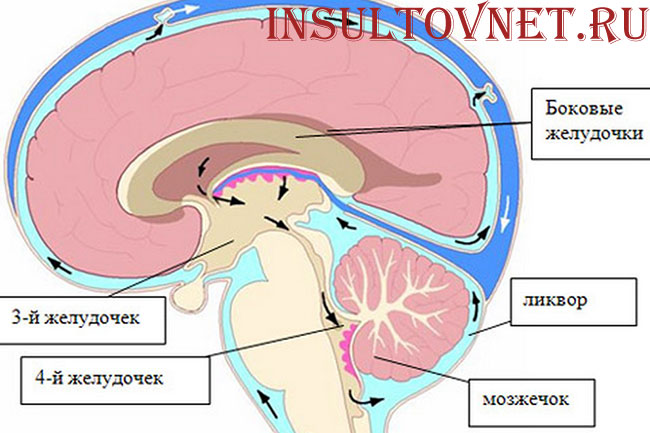 цикруляция спинномозговой жидкости